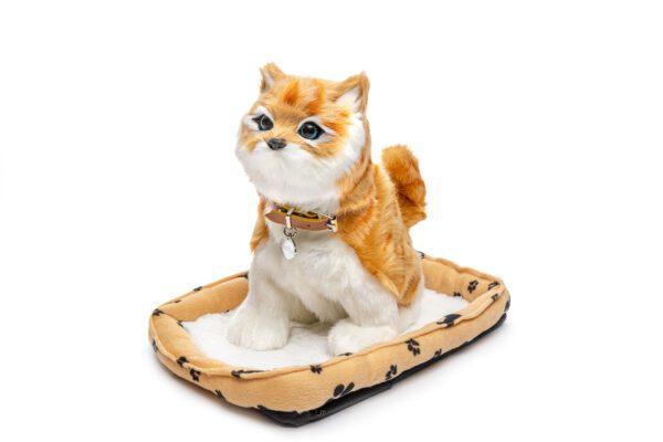 חתול מייל ג'ינג'י