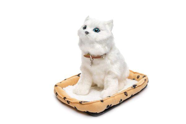 חתול מחמד לבן